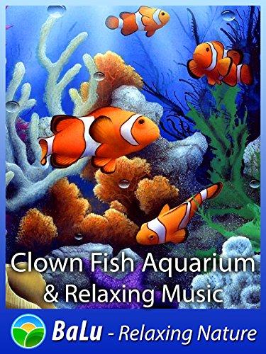 Clown Fish Aquarium & Relaxing Music - BaLu - Relaxing (Clown Fish Aquarium)