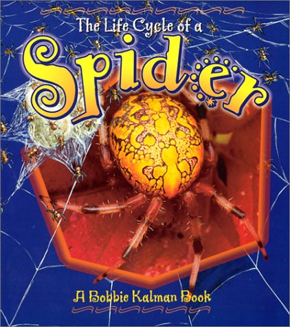 Spider (Life Cycle of A...(Paperback))