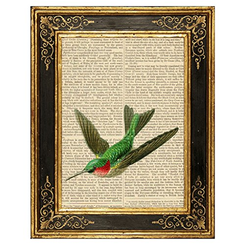 Dreamery Studio, Ruby Throated Hummingbird Art Print on Upcycled Antique Book Page, 8x10.5