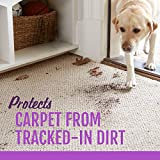 STAINMASTER Carpet Pet Stain & Odor Remover