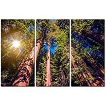 3 Pieces Modern Canvas Painting Wall Art The Picture For Home Decoration Giant Sequoias Forest Forest Landscape Print On Canvas Giclee Artwork For Wall Decor