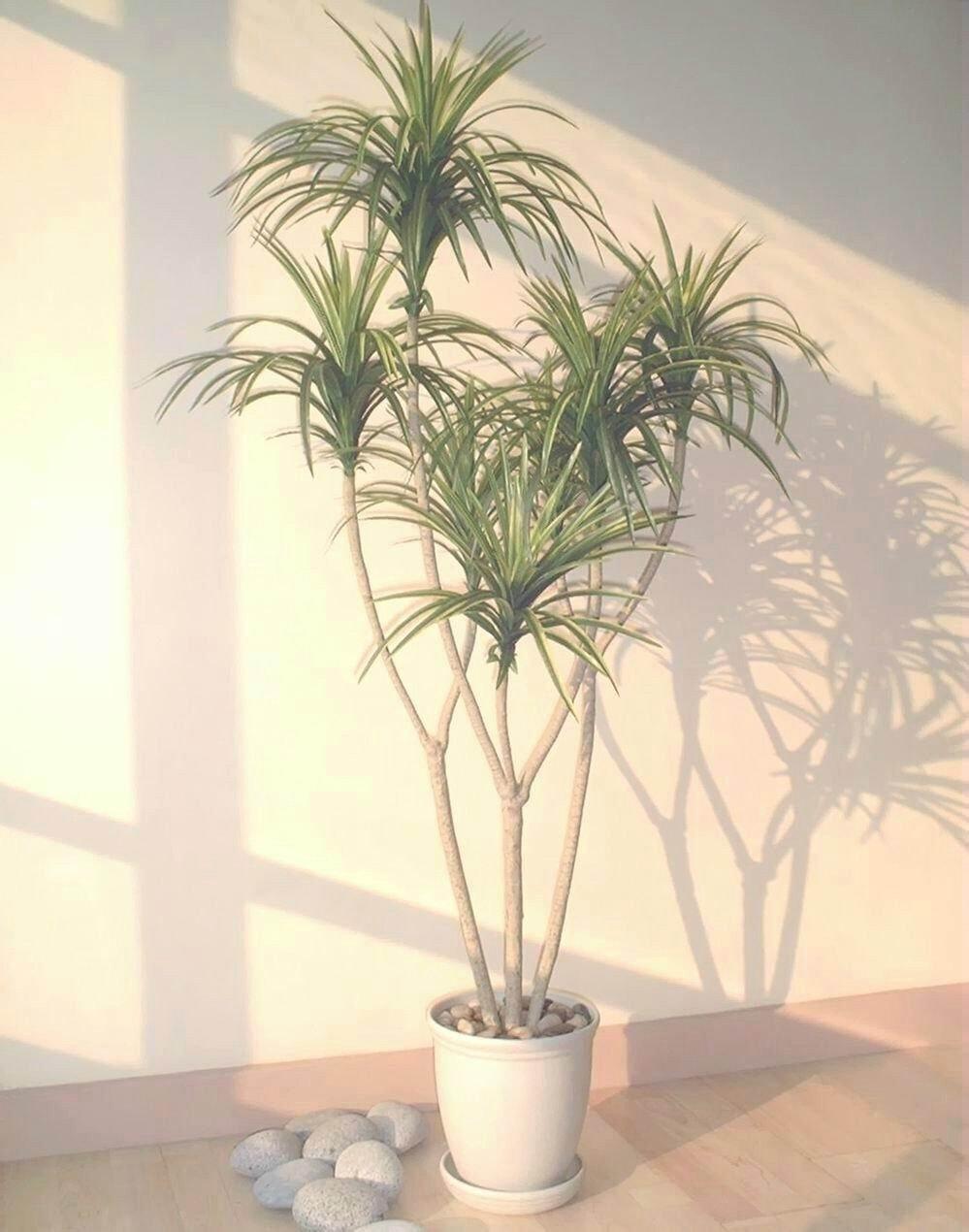 amazoncom 45ft yucca palm artificial tree without pot home u0026 kitchen
