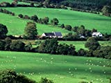 ireland in pictures - farms in county cork ireland Oil Painting On Canvas Modern Wall Art Pictures For Home Decoration Wooden Framed (12X16 Inch, Framed)