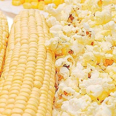 Snow Puff Hybrid F1 Popcorn Seeds (100 Seeds) : Garden & Outdoor