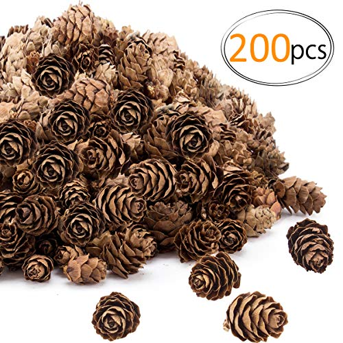 (Apipi 200 Pieces Thanksgiving Rustic Mini Brown Pine Cones in Bulk - Christmas Natural Pine Cones Ornaments for Home Decoration,Fall and Christmas)
