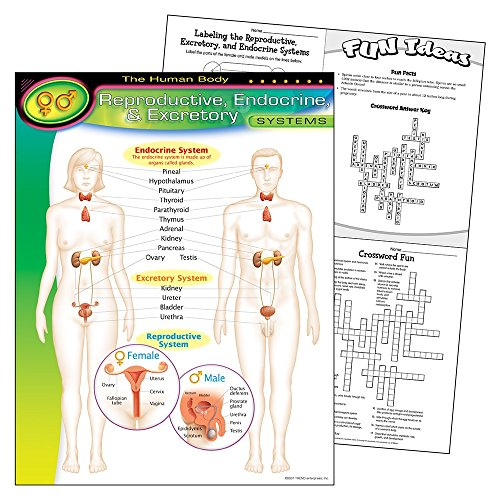 The Human Body-Reproductive Endocrine Excretory Systems Learning Chart - Excretory Systems