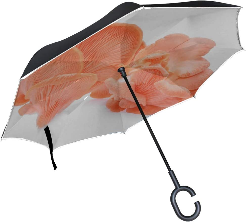Double Layer Inverted Inverted Umbrella Is Light And Sturdy Pink Oyster Mushroom Isolated On White Reverse Umbrella And Windproof Umbrella Edge Night