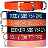 GoTags Custom Embroidered - Tough Nylon Dog Collar with Stainless Steel Metal Buckle. Personalized with Pet Name and Phone Number.