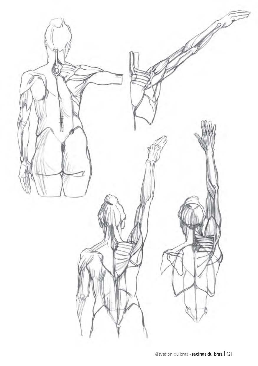 Morpho : Anatomie artistique: 9782212139143: Amazon.com: Books