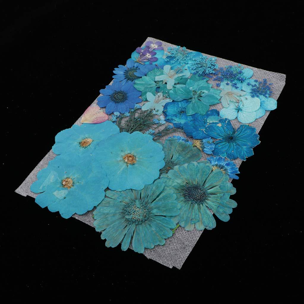 sharprepublic Echt Gepresste Getrocknete Bl/ätter DIY Karten Machen Das Scrapbooking Handwerk Lesezeichen Blau