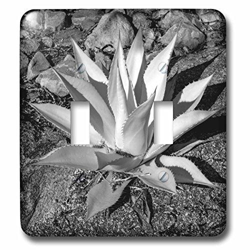 Danita Delimont - Plant - USA, Arizona, Scottsdale, Mayo Clinic Campus - Light Switch Covers - double toggle switch - Scottsdale Arizona Outlet