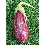 TROPICA - Aubergine – Nubia (Solanum melongena) - 5 Seeds - Vegetable specialities