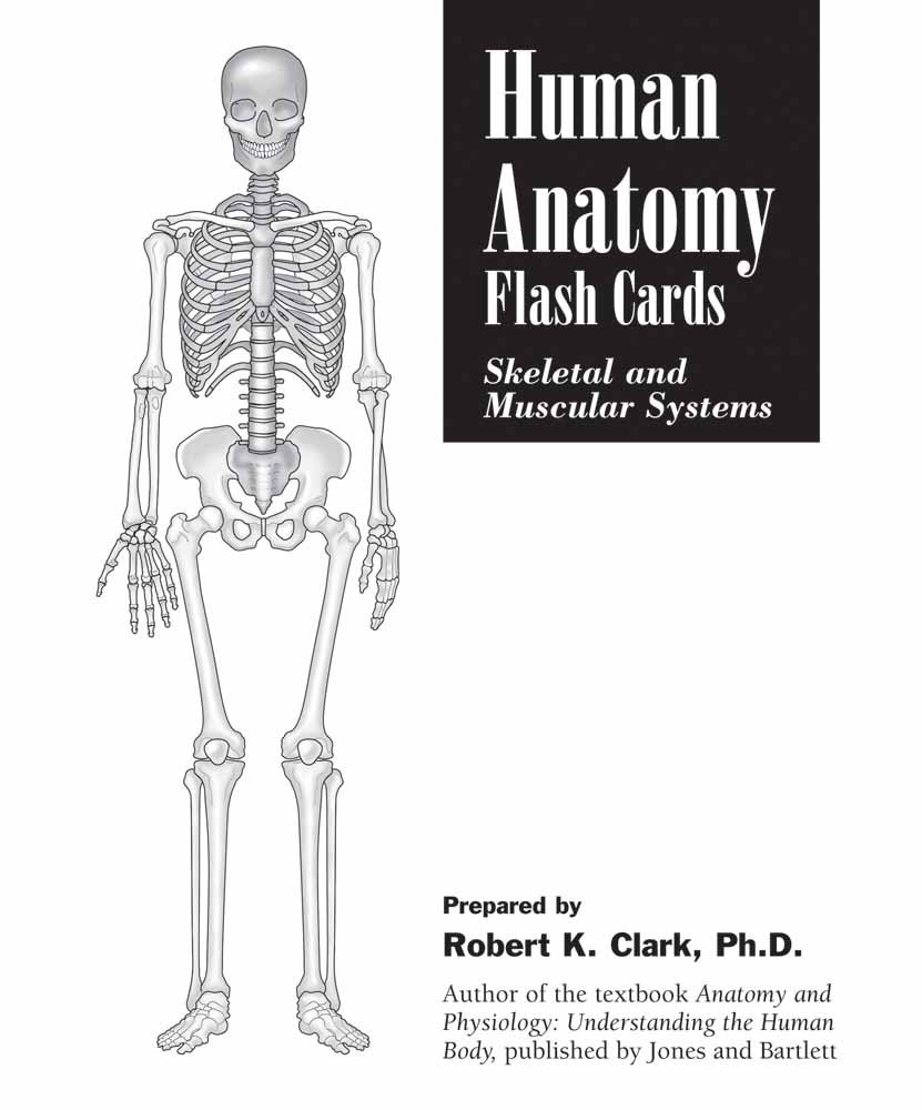 Human Anatomy Flash Cards Skeletal And Muscular Systems Robert K