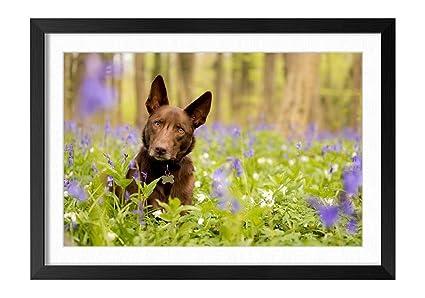 Amazon.com: FHYGJD Dog Look Blue Flowers Black Frame Art Print ...