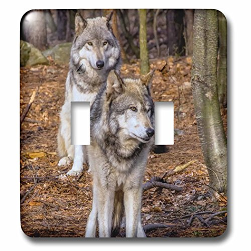 3dRose Danita Delimont - Wolves - New Jersey, Columbia, Lakota Wolf Preserve. Close-up of timber wolves. - Light Switch Covers - double toggle switch - New Jersey Outlet