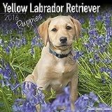 Yellow Labrador Retriever Puppies Calendar - Only Dog Breed Yellow Labrador Retriever Puppies Calendar - 2016 Wall calendars - Dog Calendars - Monthly Wall Calendar by Avonside