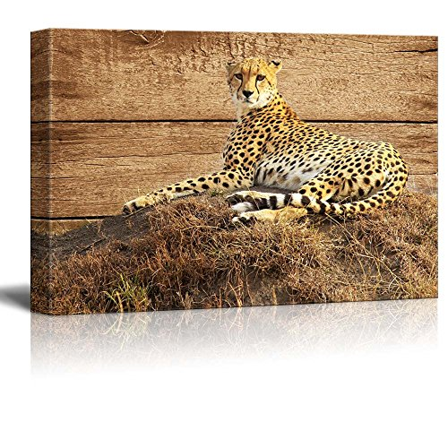 wall26 - Rustic Canvas Wall Art - Lying Leopard - Giclee Print Modern Wall Decor | Stretched Gallery Wrap Ready to Hang Home Decoration - 16x24 inches
