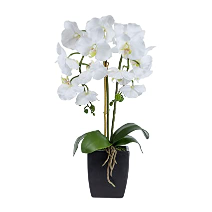 Homescapes Orquídea Artificial Blanca con Flores de Seda Realista y Hojas Verdes realistas Oriental Phalaenopsis Orquídea
