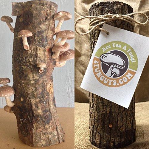12'' Shiitake Mushroom Log Grow Gourmet Mushrooms Grow in your Garden by 2funguys (Image #4)
