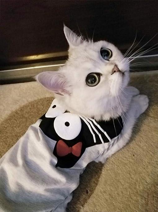ZHAOYAN - Ropa para Gato Delgado y Joven con Red para Gatos, Color Rojo Primavera Verano antipelo para Mascotas de algodón sin Mangas: Amazon.es: Productos para mascotas