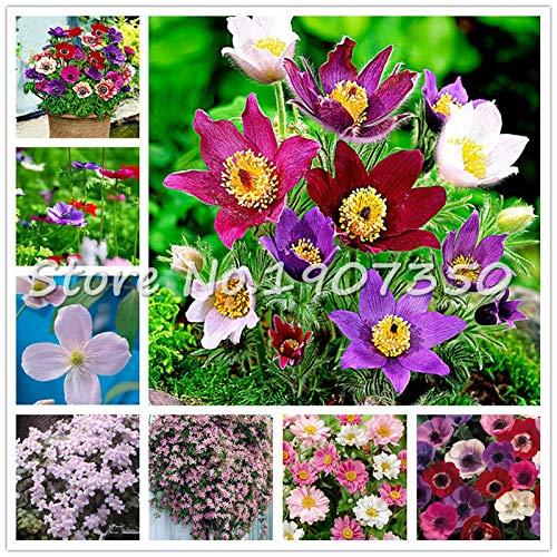 (Sale 100 Pcs Mixed Anemone Bonsai Wedding Home Decoration Bouquet Rare Flower Plant Bonsai Gift for Home Decoration )