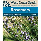 Herb Seeds - Rosemary