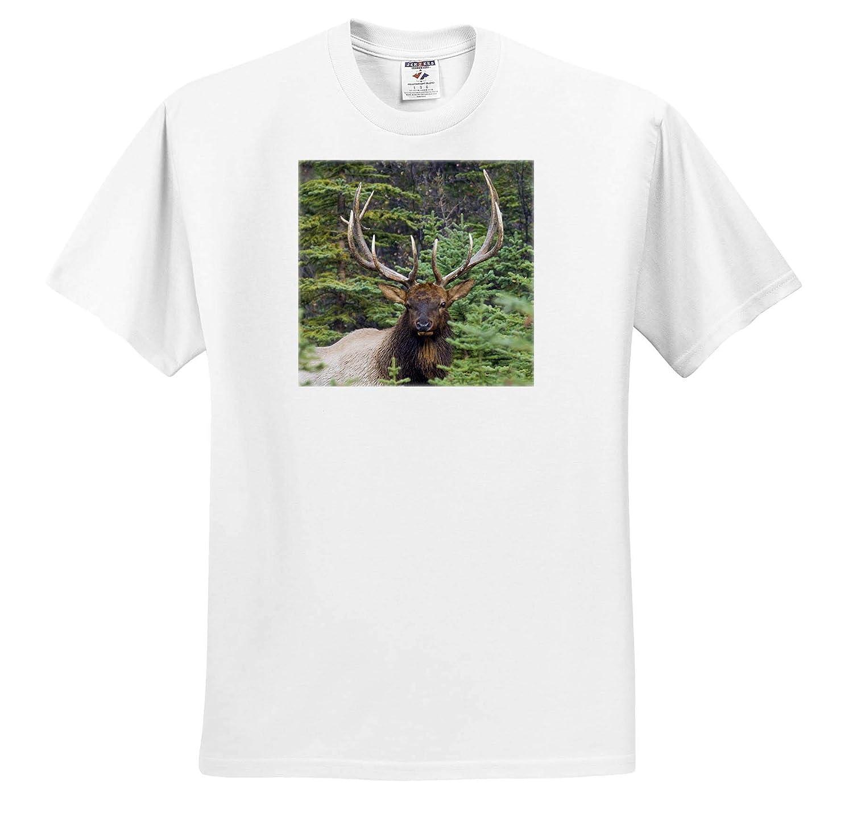 Elk ts/_313989 Rocky Mountain Bull Elk Adult T-Shirt XL 3dRose Danita Delimont