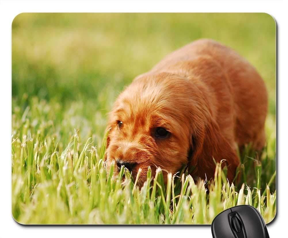 犬マウスパッド 1120-015 220*180*3 mm B07KPTJ4B2 Fl21 300*250*3 mm 300*250*3 mm|Fl21