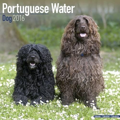 portuguese water dog calendar - 4