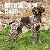 German Shorthaired Pointers Dogs Wall Calendar 2017 {jg} Best Holiday Gift Ideas - Great for mom, dad, sister, brother, grandparents, , grandchildren, grandma, gay, lgbtq.