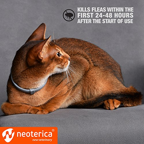 Rolf Club 3D Collar for Cats Flea and Prevention for Cats Flea and Control for - Safe Waterproof Tick Treatment