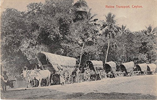 Ceylon native transport ox pulling line of wagons people antique pc Y7584
