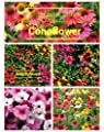 Cheyenne Mix Coneflower Seeds (Echinacea) 50 Seeds Upc 600188190328 & Free Pack Wave Mixed Petunia