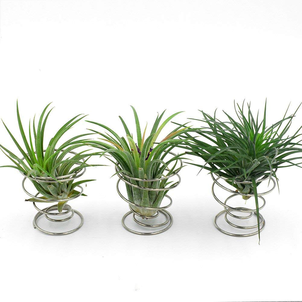 WITUSE Air Plant Holder Wire Plant Stand Tillandsia Holder Stainless Steel Wire Air Plant Stand Air Plant Holders air Plant Display Rack- 3 Pcs