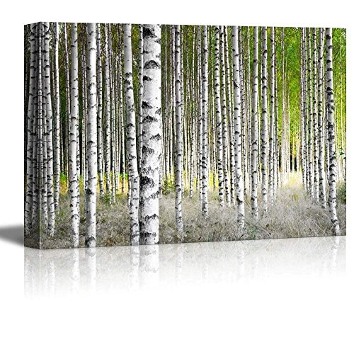 Birch Trees in Bright Sunshine in Late Summer Wall Decor ation …