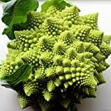 Broccoli Romanesco 50 Seeds per Packet - Rare & Unique