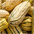 Package of 45 Seeds, Delicata Winter Squash (Cucurbita pepo) Non-GMO Seeds by Seed Needs