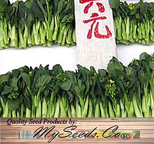 250 Choy Sum Brassica Vegetable Seed Seeds TSOI SIM CHOY SIM ~ EXCELLENT FLAVOR