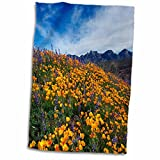 3dRose Danita Delimont - Flower - Mexican Poppies and Lupine bloom, Sonoran Desert, Tucson, Arizona - 15x22 Hand Towel (twl_229763_1)