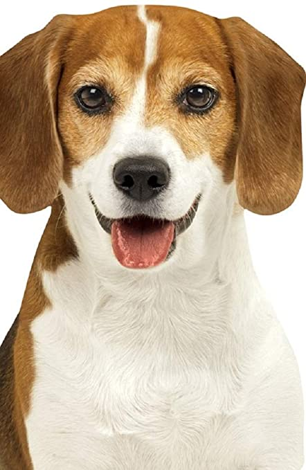 Amazon.com: Playhouse Beagle - Cuaderno de bolsillo para ...