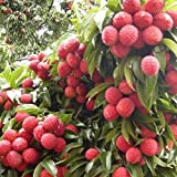 Fresh Lychee Litchi Tree Seeds Delicious Sweet Seasonal Succulent Fruit Plants 10pcs