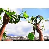 Pince legatrice à ruban pour opérations d'attache sur chaque type de plante. Utilisable avec rubans de différent épaisseur. Avec Façade chargement points, boîtier Ruban à couvercle avec ouverture.