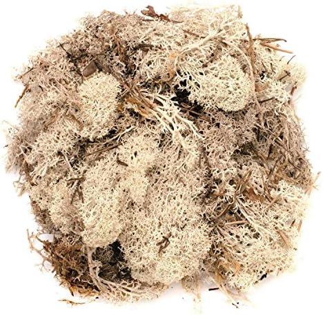 Glorex 6 3803 610 - Islandmoos, 50 g, natur, zum Basteln, Dekorieren, für den Modell- und Krippenbau