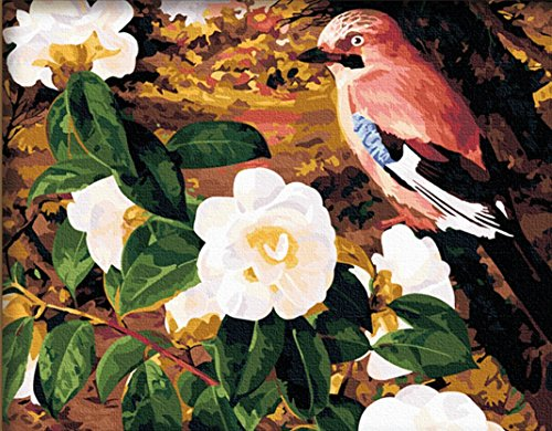5102 Van - CaptainCrafts New Paint by Number Kits - Flower Bird 16x20 inch Frameless - Diy Painting by Numbers for Adults Beginner Kids