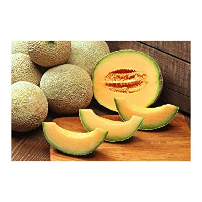 25 Iroquois Cantaloupe Sweet Aromatic Melon Early Seeds #SRP99 : Garden & Outdoor
