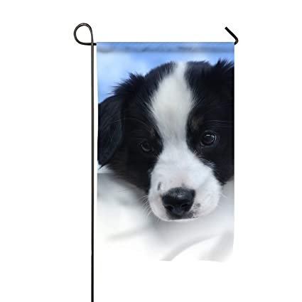 Amazon com : Blue Border Collie Dog Fade Resistant Sports