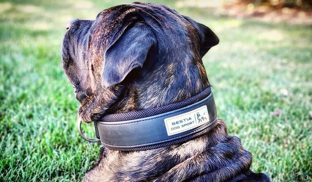 Bestia Dog Sport Collar Ultra Resistente para Perros. Acolchado ...