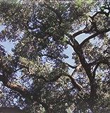 Trees (Vinyl) [Importado]
