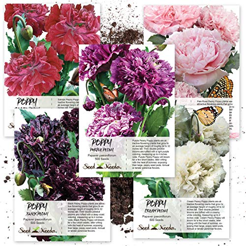 Seed Needs Peony Poppy Seed Collection (5 Individual Seed Packets) 2,500 Seeds Collectively