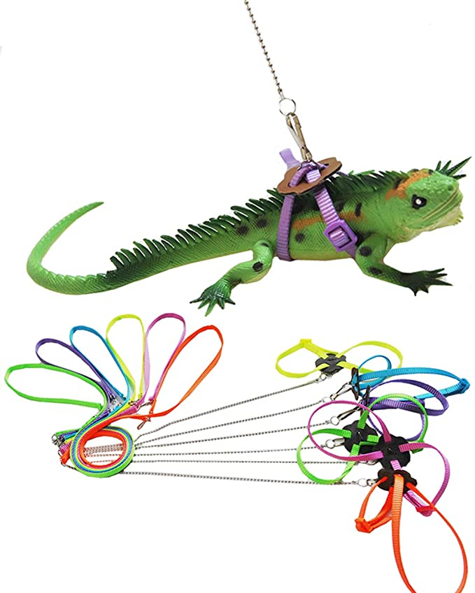 Amazon Com Dreamer U Adjustable Reptile Lizard Harness Leash